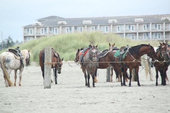 Hevoset odottivat ratsastajia rannalla.