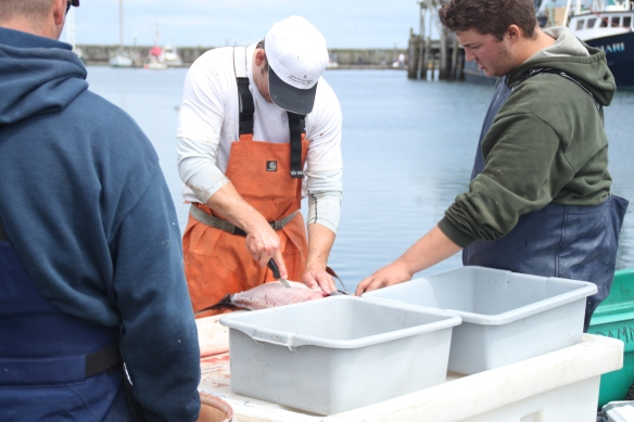 Rannassa perattiin tuoreehkoa kalaa