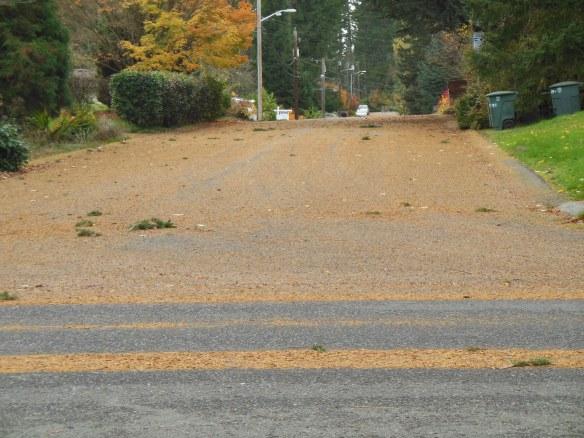 Pari viikkoa sitten täällä vähän tuuli. Lähistön kadut oli kuin paksun neulasmaton peittämät.